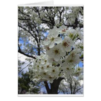 Frühlings-Blüte Grußkarte