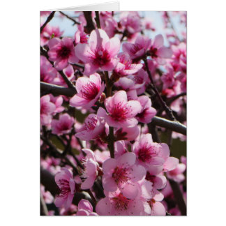 Frühlings-Blüten Mitteilungskarte