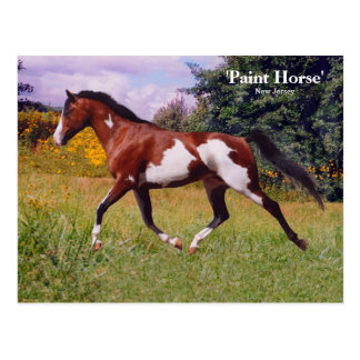 Frühlings-Farben-Pferdepostkarte Postkarte