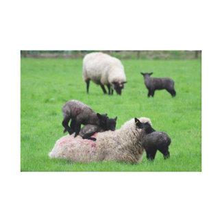 Frühlings-Lamm und Schafe Leinwanddruck