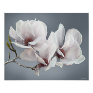 Frühlings-Magnolienblüte, Rosa, weich Grau Poster