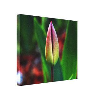Frühlings-Stolz-Leinwand Galerie Falt Leinwand