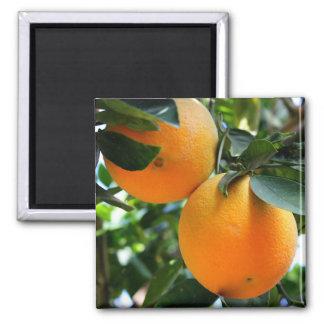 Fruit frais - aimant d'oranges