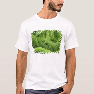 Fuchsschwanz-Farn, Spargel densiflorus Myers T-Shirt