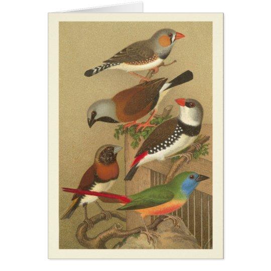 Fünf bunte Haustier-Vögel gehockt auf einer Karte
