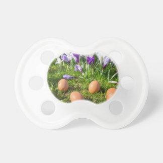 Fünf lose Eier, die nahe blühenden Krokussen Schnuller