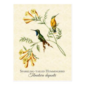 Funkelnde angebundene Kolibri-Vintage Kunst Postkarte
