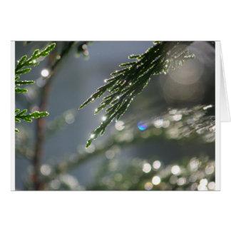 funkelnder Tau auf Zypresse-Baum Karte