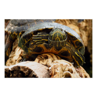 Funny yellow turtle poster