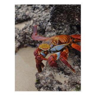 Galapagos2 Postkarte