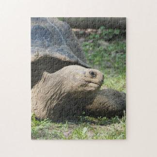 Galapagos-Schildkröte 586