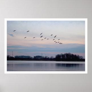 Gänse, die über den Schutz fliegen Poster