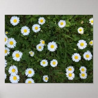 Gänseblümchen-Blumen-Plakat Poster