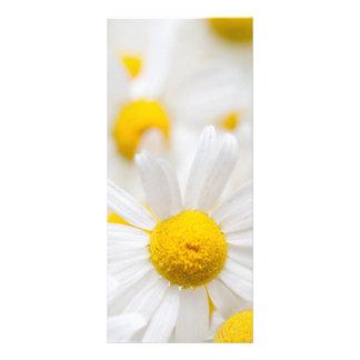Gänseblümchen-Blumen Werbekarte