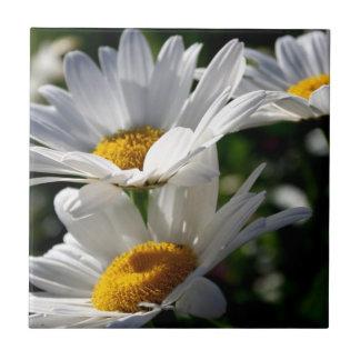 Gänseblümchen: Drei weiße Gänseblümchen Keramikfliese