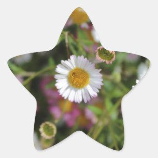 Gänseblümchen-Foto Stern-Aufkleber