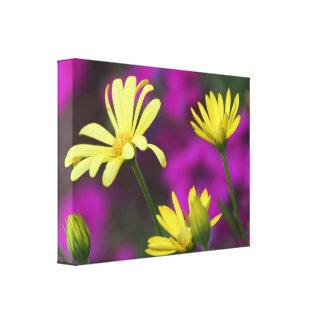 Gänseblümchen im violetten Hintergrund auf Gespannte Galeriedrucke