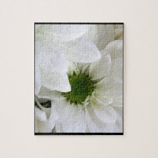 Gänseblümchen in (größtenteils) all-weißem
