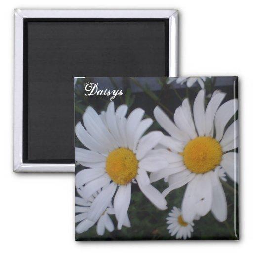 Gänseblümchenkarte danken Ihnen zu kardieren Magnete