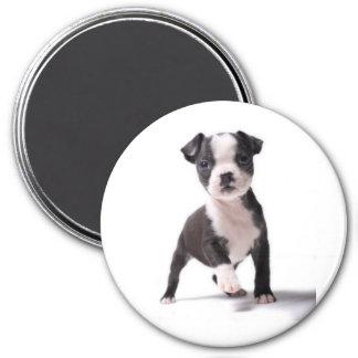 Geben Sie mir Ihren Tatzen-Boston-Welpen-Magneten Runder Magnet 7,6 Cm