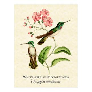 Gebirgsedelstein-Kolibri-Vintage Kunst Postkarte