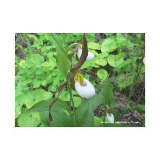 """Gebirgsfrauenschuh Orchideen-Leinwand 20"""" x 16"""" Leinwanddruck"""