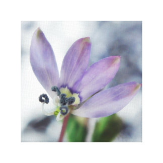 Geboren, wild zu sein. Eingesäumte Spinnen-Blume Leinwanddruck