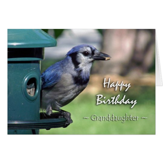Geburtstag für Enkelin, blaues Jay an der Zufuhr Karte
