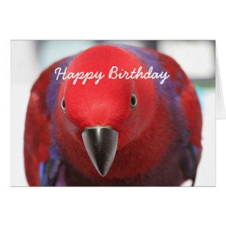 Geburtstagskarte Eclectus Papagei Karte