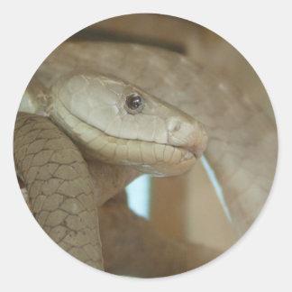Gefährliche Schlange auf dem Baum Runder Aufkleber