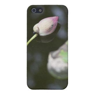 Gefallenes Lotus iPhone 5 Hüllen