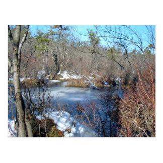 Gefrorener Sumpfgebiet-Teich Postkarte