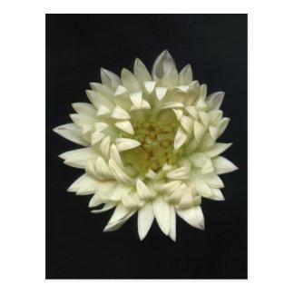 Gefühls-Blume Postkarte