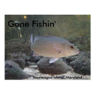 Gegangenes Fishin in Assateague Insel, MD Postkarte