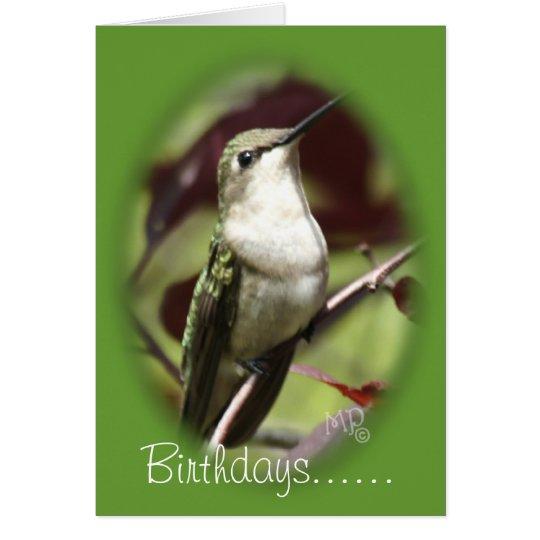 Gehockter weiblicher Kolibri fertigen jede Grußkarte
