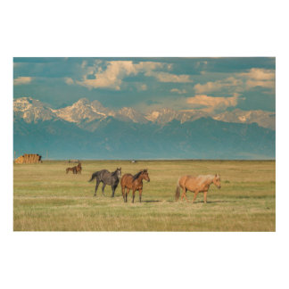 Gehörte Pferde im Hayfield Holzleinwand