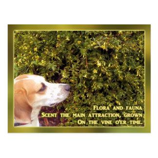 Geißblatt-Jagdhund Postkarte