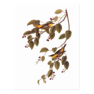 Gekohlte Trällerer Audubon Vogel-Postkarte Postkarte