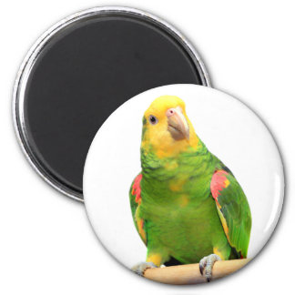 Gelb-köpfiger Amazonas Runder Magnet 5,7 Cm