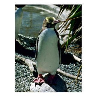 Gelb-mit Augen Pinguin Postkarte