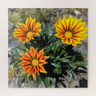 Gelb-orangee Gazania-Blumen