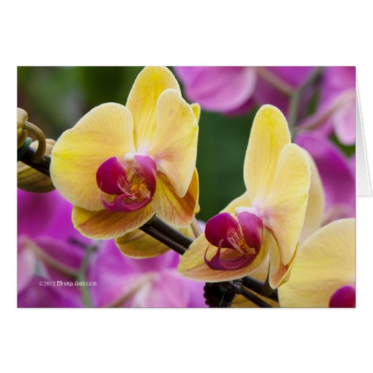 Gelb und Fushia Orchidee Grußkarte