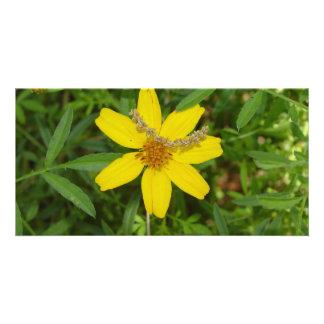Gelbe Blume im Gras Karte