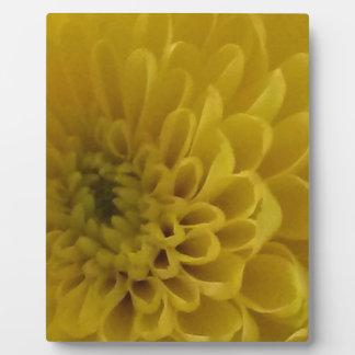 Gelbe Blume Platte