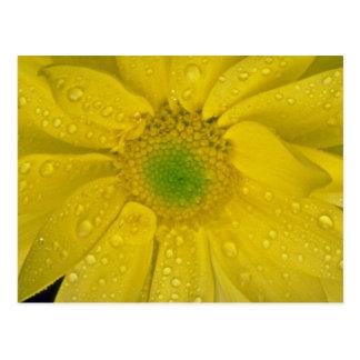 Gelbe Blumen der Blume Postkarte