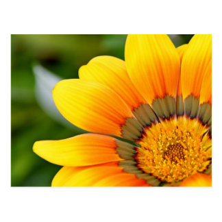 Gelbe Blumen-Postkarte Postkarte