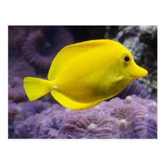 Gelbe Fische Postkarte