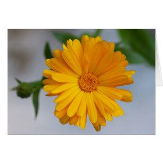 Gelbe Gerbera-Gänseblümchen-Wildblume Karte