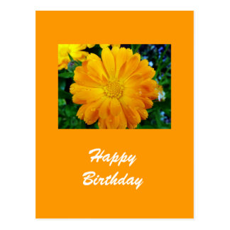 gelbe Gerberagänseblümchen-Blume Postkarte