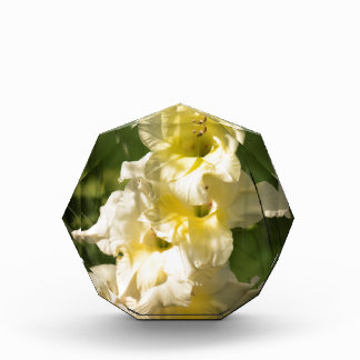 Gelbe Gladiolus-Blumen-Spitze Acryl Auszeichnung